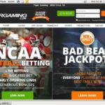 Tiger Gaming Freebet